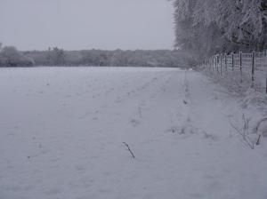 Christmas tree plantation 019